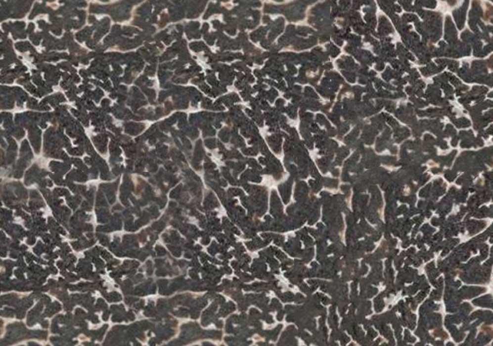 winterr black truffles pulp