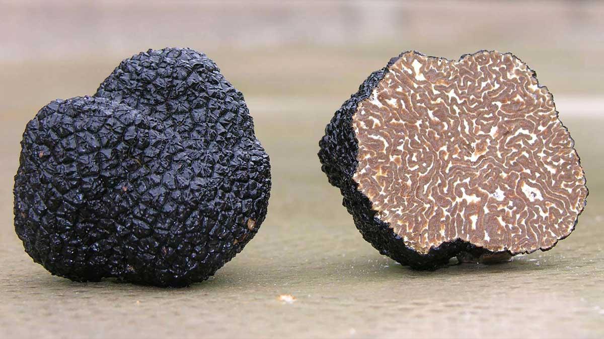 Những đường vân đặc trưng của nấm truffle đen mùa đông. Ảnh: Angelozzi Truffles