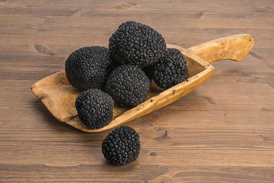summer black truffles angellozzi truffles