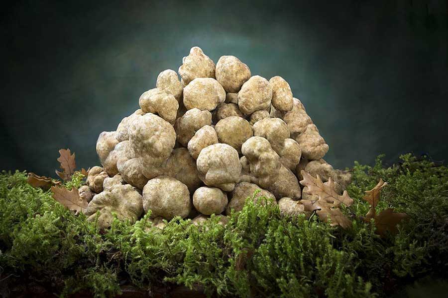 white truffle angellozzi truffles